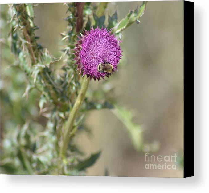 Bees Canvas Print featuring the photograph A Love Affair by Donna Greene