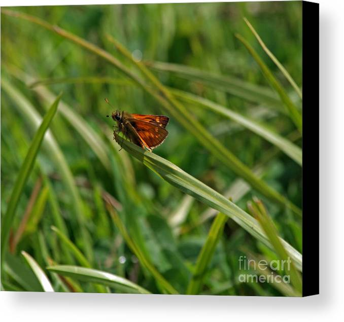 Large Canvas Print featuring the photograph Large Skipper Butterfly by Ruth Hallam