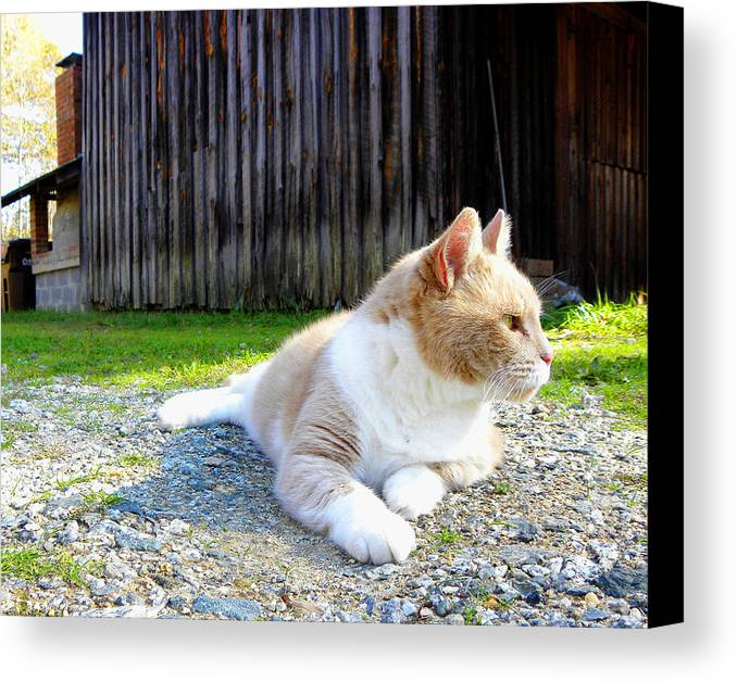 Cat Canvas Print featuring the photograph Toby Old Mill Cat by Sandi OReilly
