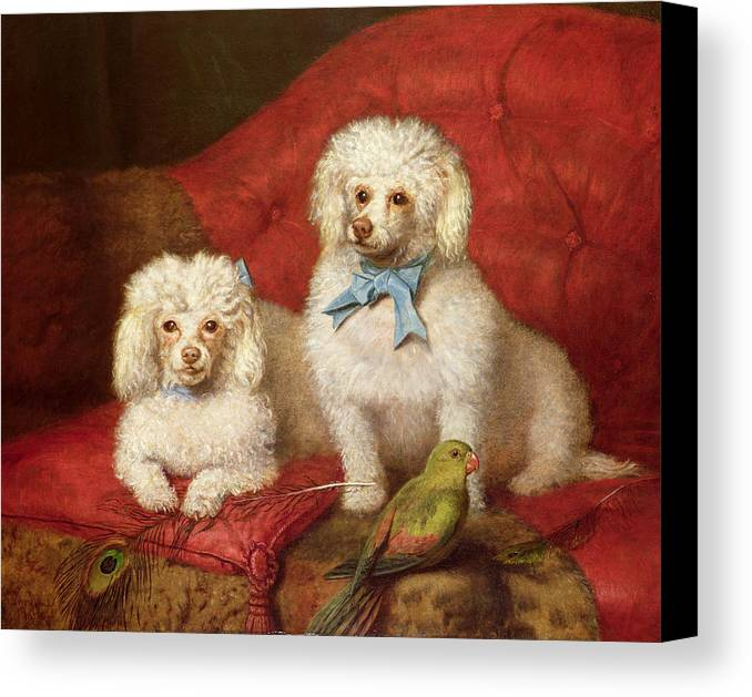 A Pair Of Poodles By English School (19th Century) Canvas Print featuring the painting A Pair Of Poodles by English School