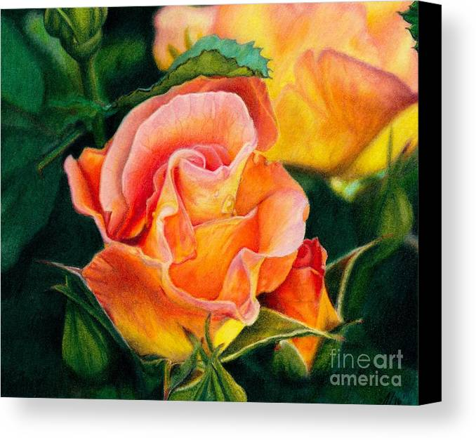 Coloured Pencil Canvas Print featuring the painting A Rose For Nan by Amanda Jensen