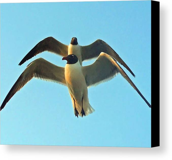Seagulls Canvas Print featuring the photograph In Tandem At Sunset by Sandi OReilly