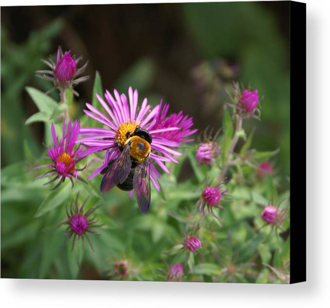 Bumble Bee Canvas Print featuring the photograph Just Beeing Debbie-may by Debbie May