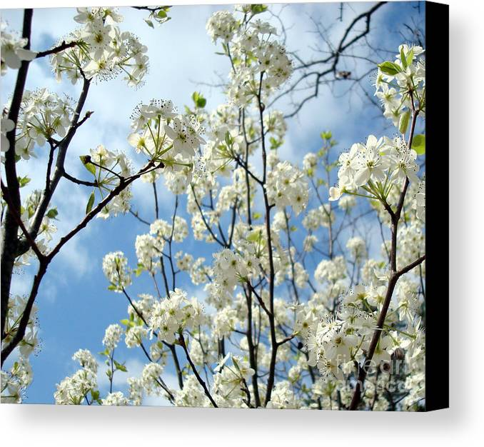 Trees Canvas Print featuring the photograph Spring Awakening by Kathy Bucari