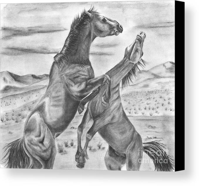 Horse Canvas Print featuring the drawing The Wild West Mustangs by Russ Smith