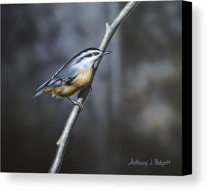 Nuthatch Canvas Print featuring the painting Whisper by Anthony J Padgett