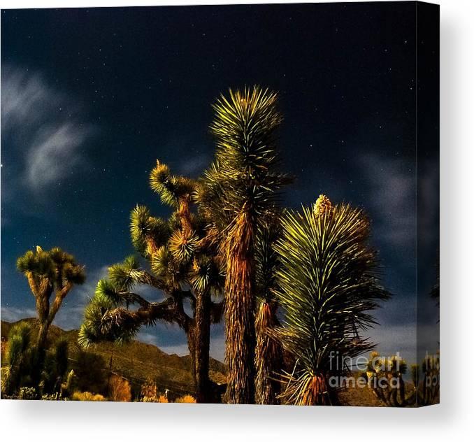 Desert Moon Canvas Print featuring the photograph Night Desert by Angela J Wright