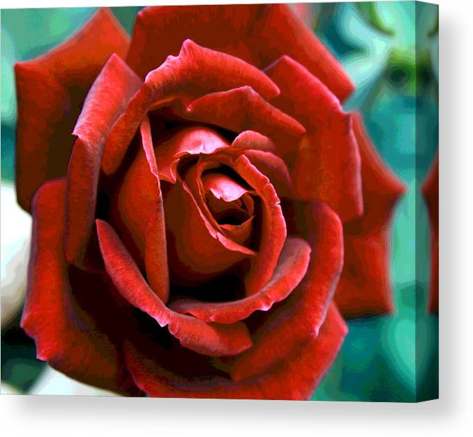 Rose Canvas Print featuring the photograph Rose by Greg Thiemeyer