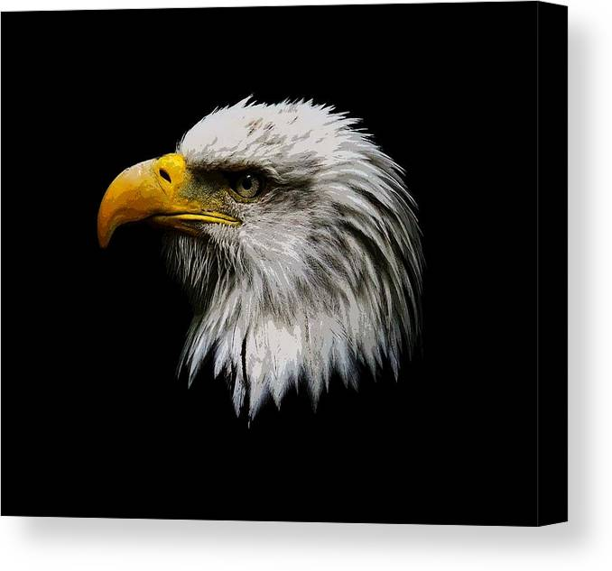 f44e62027e21 Bald Eagle Canvas Print featuring the photograph Painted Bald Eagle Head by  Steve McKinzie