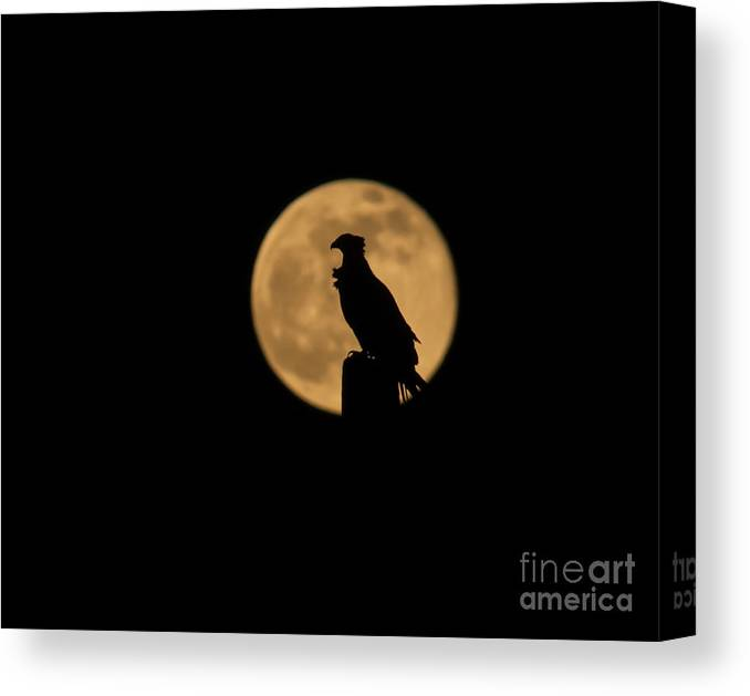 Moon Canvas Print featuring the photograph Bird Silhouette by Zina Stromberg