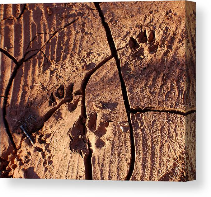 Photography Canvas Print featuring the photograph Desert Paw Prints by Heather S Huston