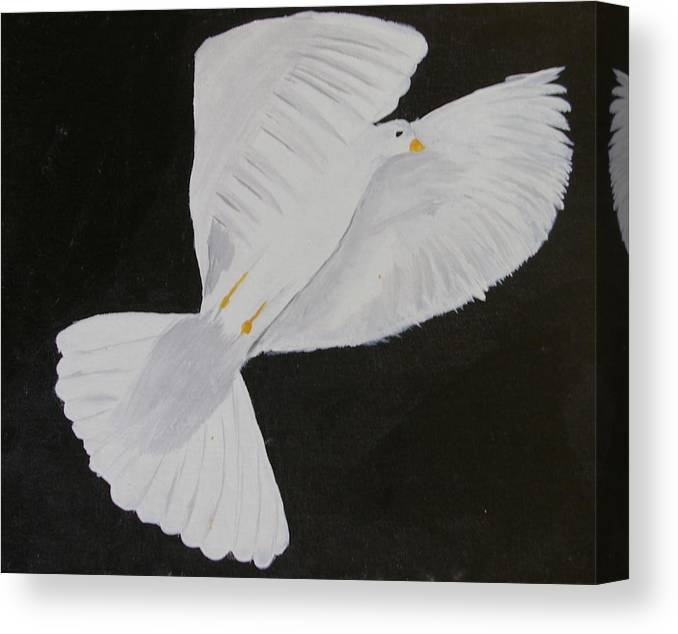 Bird Canvas Print featuring the painting Dove by Andrew Corl