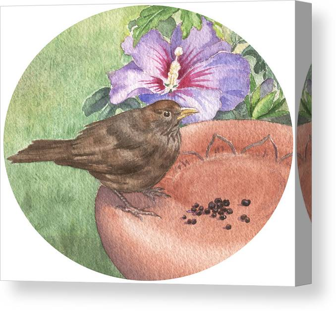 Bird. Wildlife Canvas Print featuring the painting Young Blackbird After Raisins by Maureen Carter