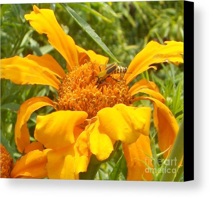 Bee Canvas Print featuring the photograph Bee Bold 3 Of 3 by Sandra Schroeder