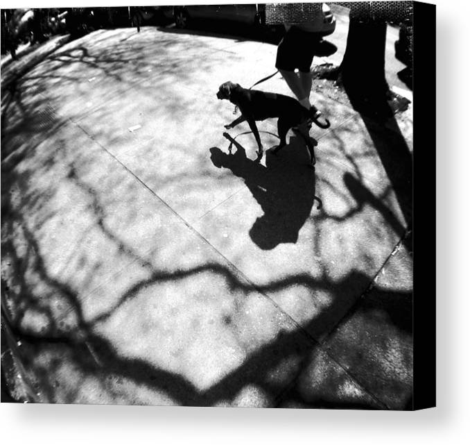 Dog Canvas Print featuring the photograph Dog Walking In Brooklyn by Frank Winters