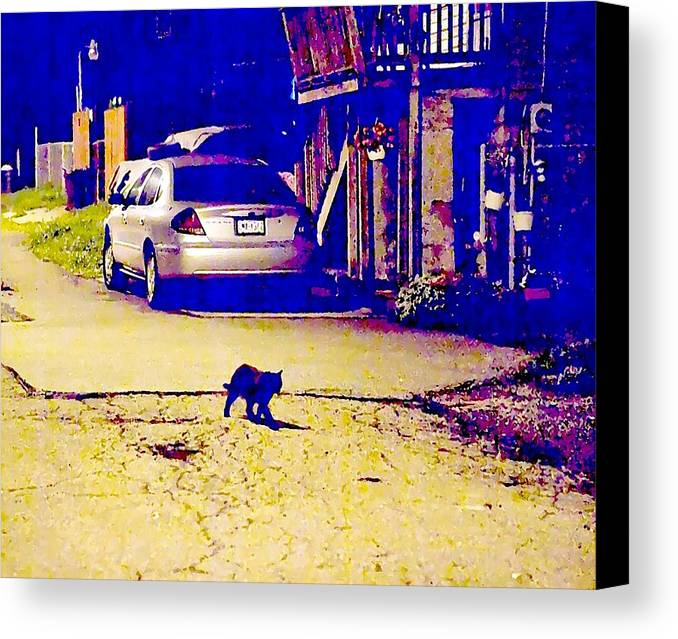 Black Cat Canvas Print featuring the photograph Black Cat Crosses Path by John Toxey
