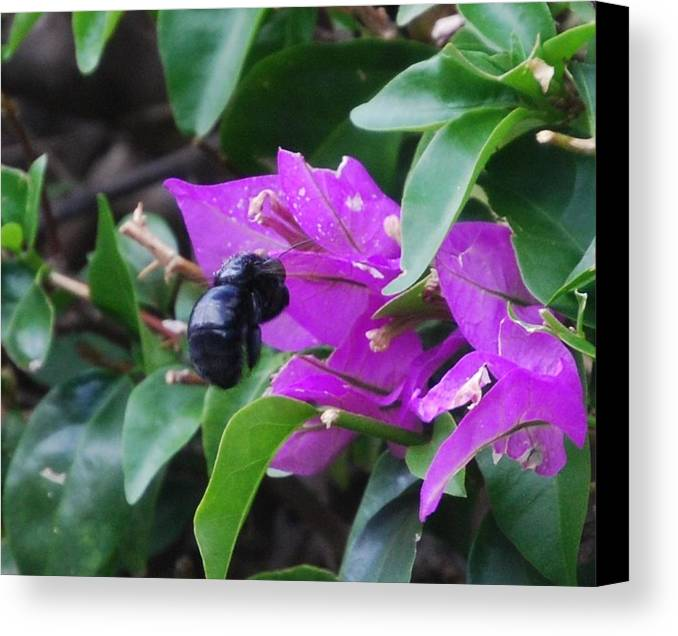 Bee Canvas Print featuring the photograph Bzzzz by Lakida Mcnair
