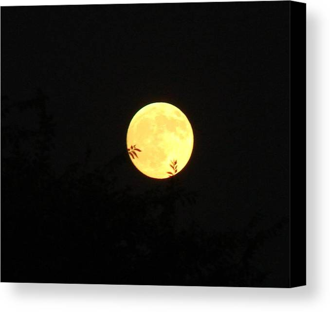 Full Moon Canvas Print featuring the photograph Full Moon August 2008 by Liz Vernand
