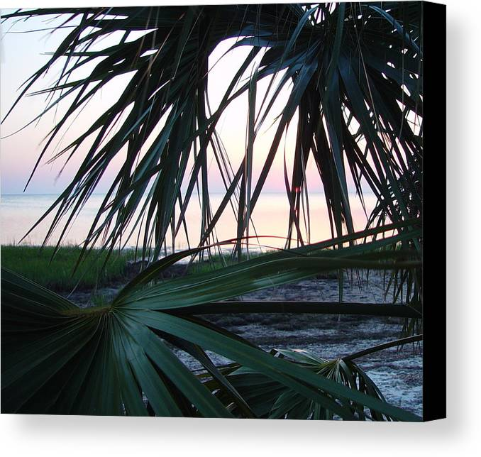 Palms Canvas Print featuring the painting The Peeking Palms by Debbie May