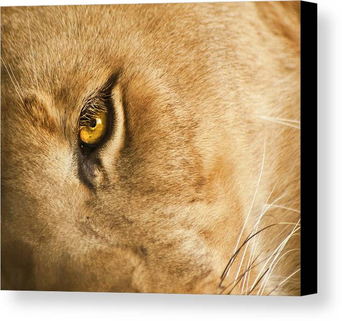 Lion Canvas Print featuring the photograph Your Lion Eye by Carolyn Marshall