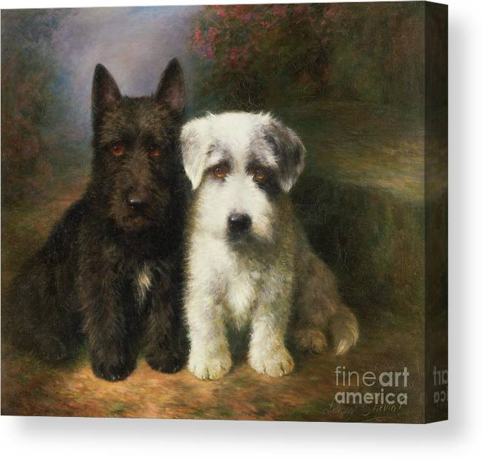 Dogs Canvas Print featuring the painting A Scottish And A Sealyham Terrier by Lilian Cheviot