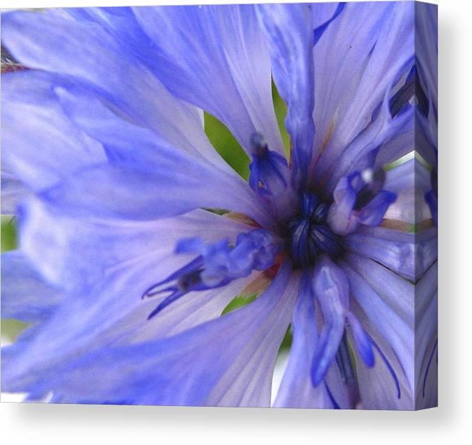 Flower Canvas Print featuring the photograph Blue Princess by Rhonda Barrett