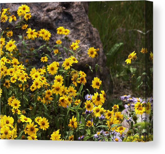 Flowers Canvas Print featuring the photograph Wildflowers Honoring Mary Jabens by Judy Schneider