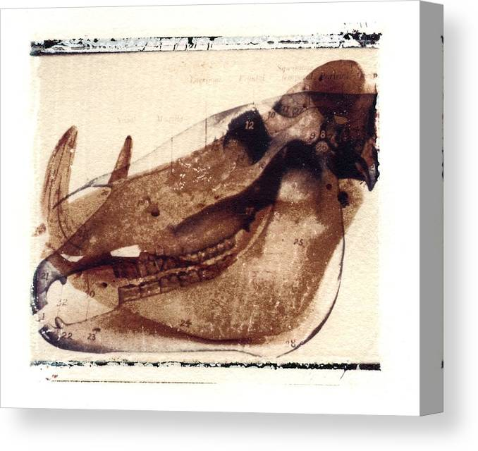 Polaroid Transfer Canvas Print featuring the photograph X Ray Terrestrial No. 6 by Jane Linders