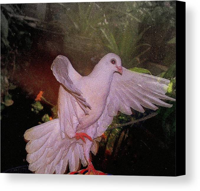 Dove Canvas Print featuring the mixed media The Dance by YoMamaBird Rhonda