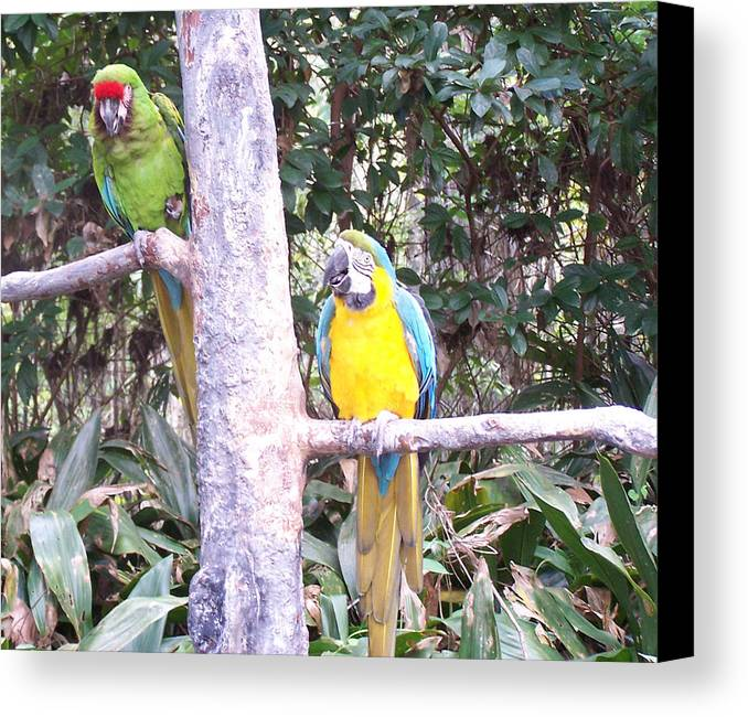 Parrots Canvas Print featuring the photograph Happy And Sappy by Donnell Carr