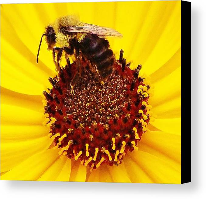 Bee Canvas Print featuring the photograph Just Bee by Paulette Thomas