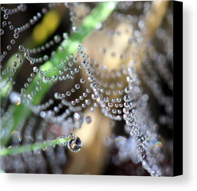 Web Canvas Print featuring the photograph Web 20131022-13 by Carolyn Fletcher