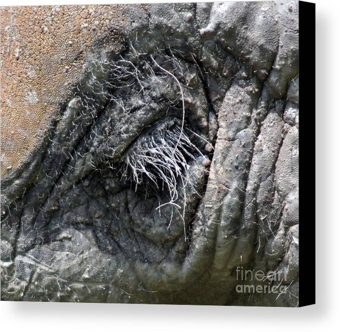 Elephant Canvas Print featuring the photograph Elephant Eyelash by Joanne Kocwin