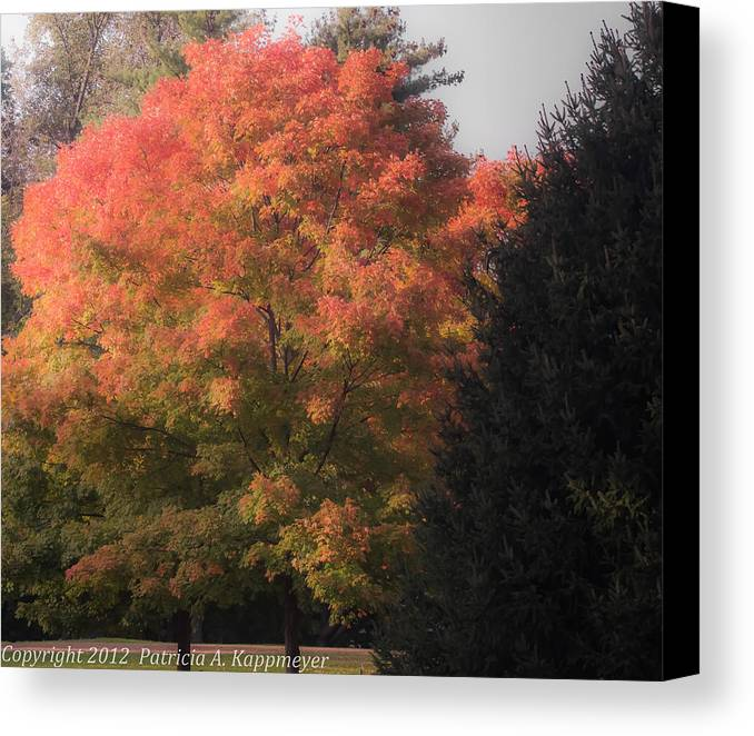 October Canvas Print featuring the photograph October Sunlight On Tree Tops by Bedford Shore Photography