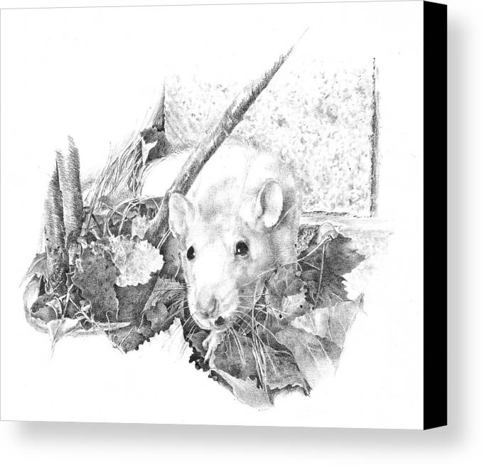 Rat Canvas Print featuring the drawing Reggie The Rat by Judith Angell Meyer