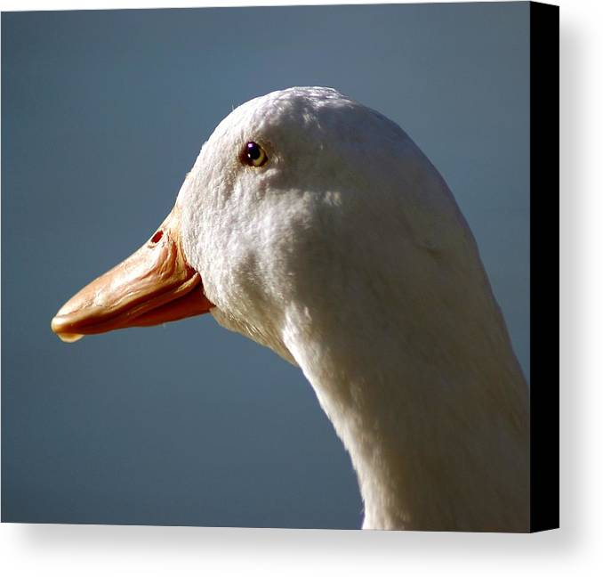 Animals Canvas Print featuring the photograph Standing Proud by Lori Mellen-Pagliaro
