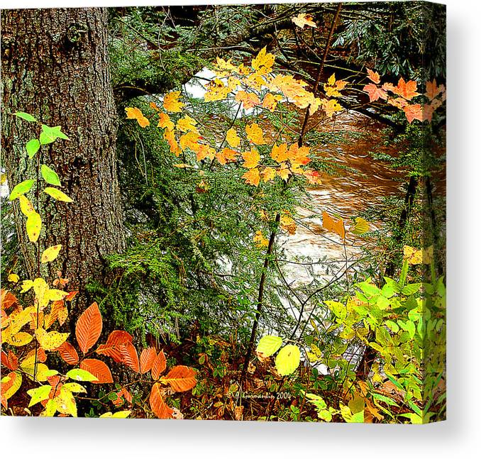 Beech Canvas Print featuring the photograph Autumn By A Pennsylvania Mountain Stream Digital Art by A Gurmankin