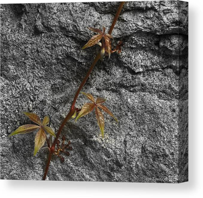 Visual Link Canvas Print featuring the photograph Climbing by Linda Leeming