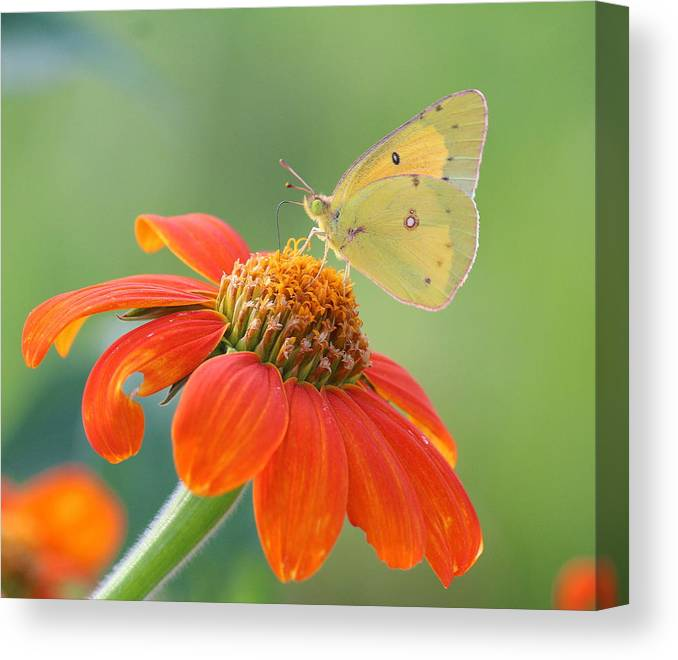 Solace Canvas Print featuring the photograph Colorful Light by David Jones