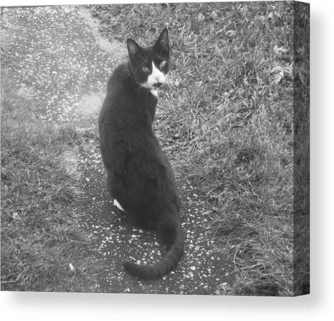 Black Whit Cat Outside Old Canvas Print featuring the photograph Look Back by Crystal