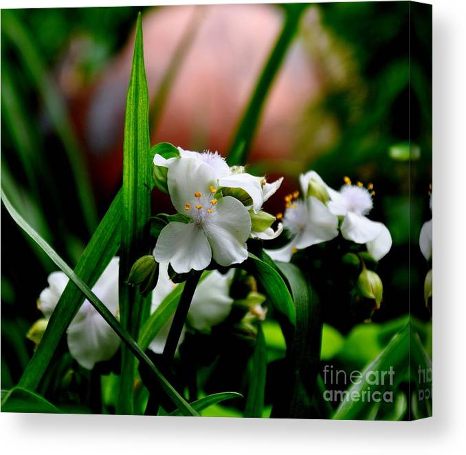 Nature Canvas Print featuring the photograph Tradescantia  by Tanya Searcy