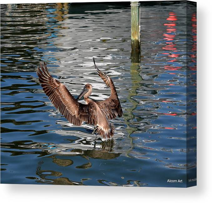 Pelican Canvas Print featuring the photograph Hallelujah by Brenda Alcorn