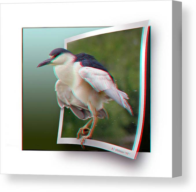 3d Canvas Print featuring the photograph Black Crowned Night Heron - Use Red-cyan 3d Glasses by Brian Wallace