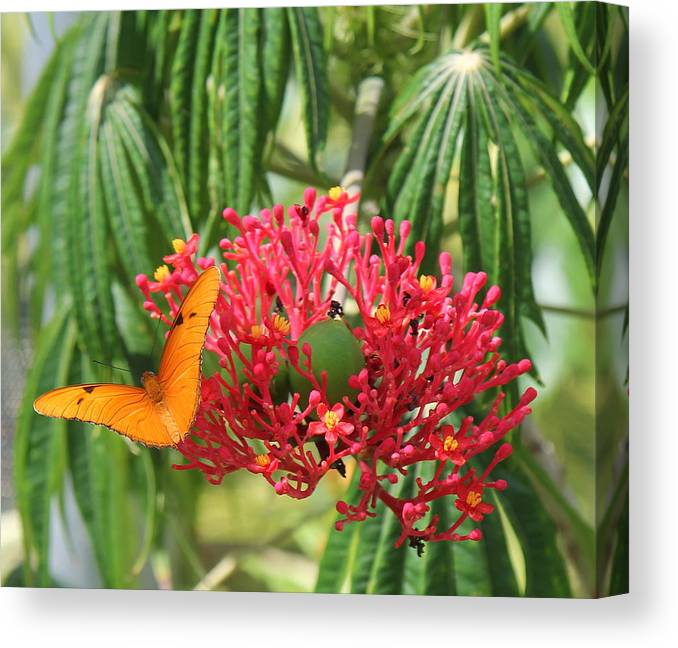 Flower Canvas Print featuring the photograph On The Wings Of Butterflies by Sean Allen
