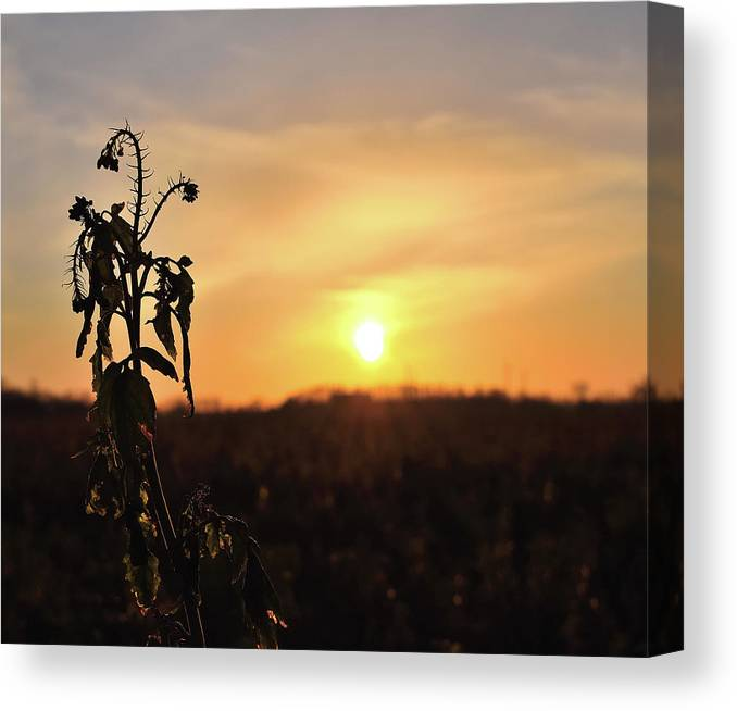 Sonnenuntergang Blume Flowwer Sky Himmel Canvas Print featuring the photograph Sonnenuntergang by Scimitarable