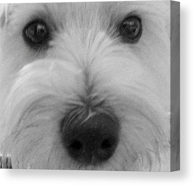 Dog Canvas Print featuring the photograph The Eyes Have It by Ed Smith