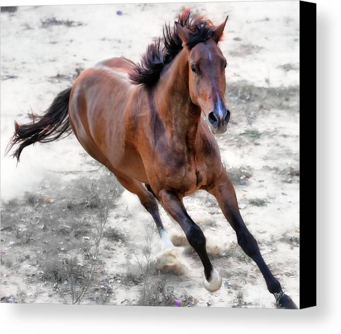 Horizontal Canvas Print featuring the photograph Warmblood Horse Galloping by Vanessa Mylett