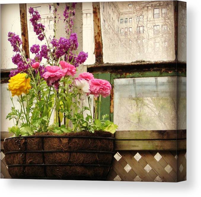 Geraniums Canvas Print featuring the photograph Spring Conservatory by Cara Imperato