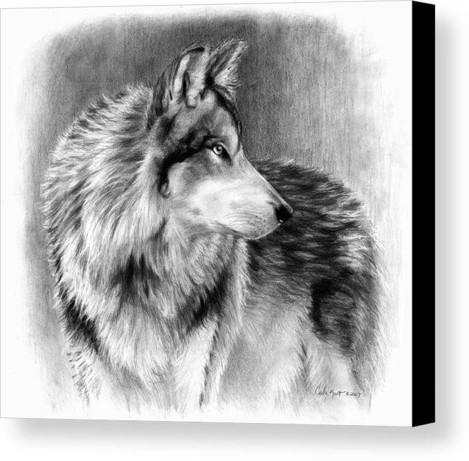Wolf Canvas Print featuring the drawing Cautious Eyes by Carla Kurt