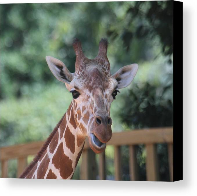 Giraffe Canvas Print featuring the photograph Let's Talk About It by Cathy Lindsey
